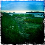 The grass along the coast of Lauttasaari is like walking on a bed.