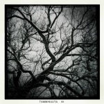 Tree branches look like veins or nerve endings in the sky.