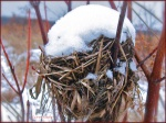 A bird's nest covered with ice and snow.