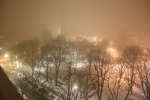 A view from my balcony of the foggy park below.